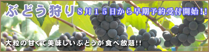 main-grape03